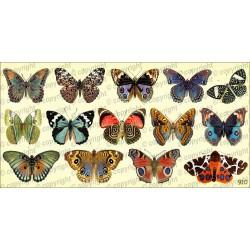 Купон для творчества бабочки