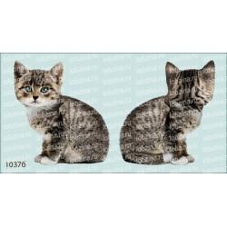 Велюрик котенок